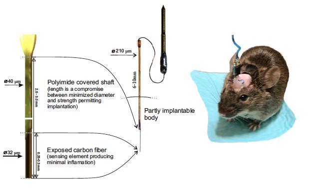 Carbon fiber electrodes for chronic implantation